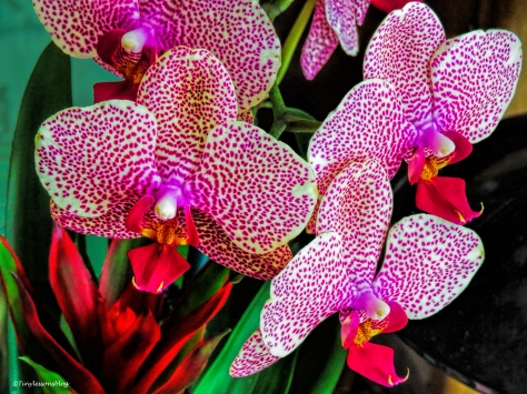 my orchid 2 ud56.jpg