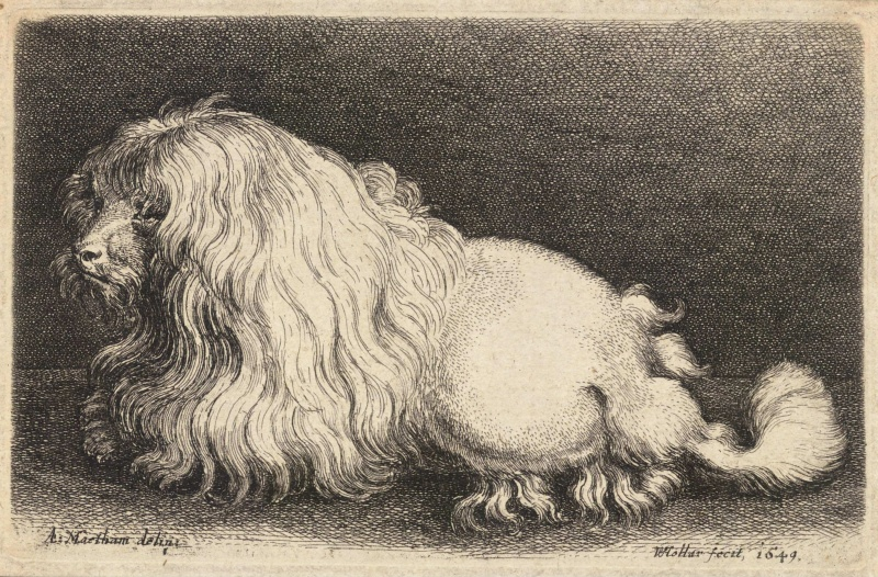 Wenceslas_Hollar_-_A_poodle,_after_Matham