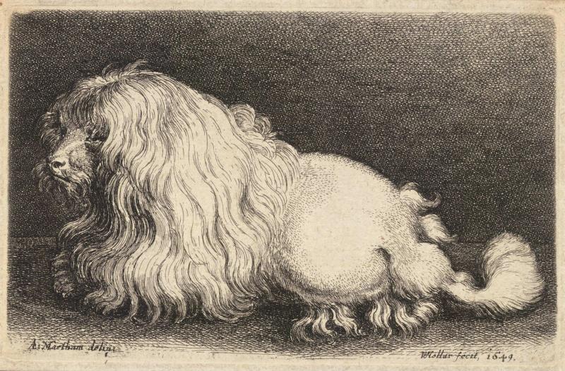 Wenceslas_Hollar_-_A_poodle,_after_Matham