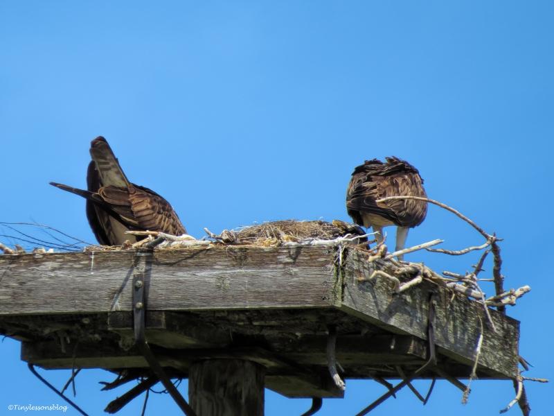 osprey family ud61