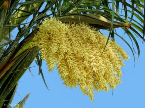 palm flowers ud60