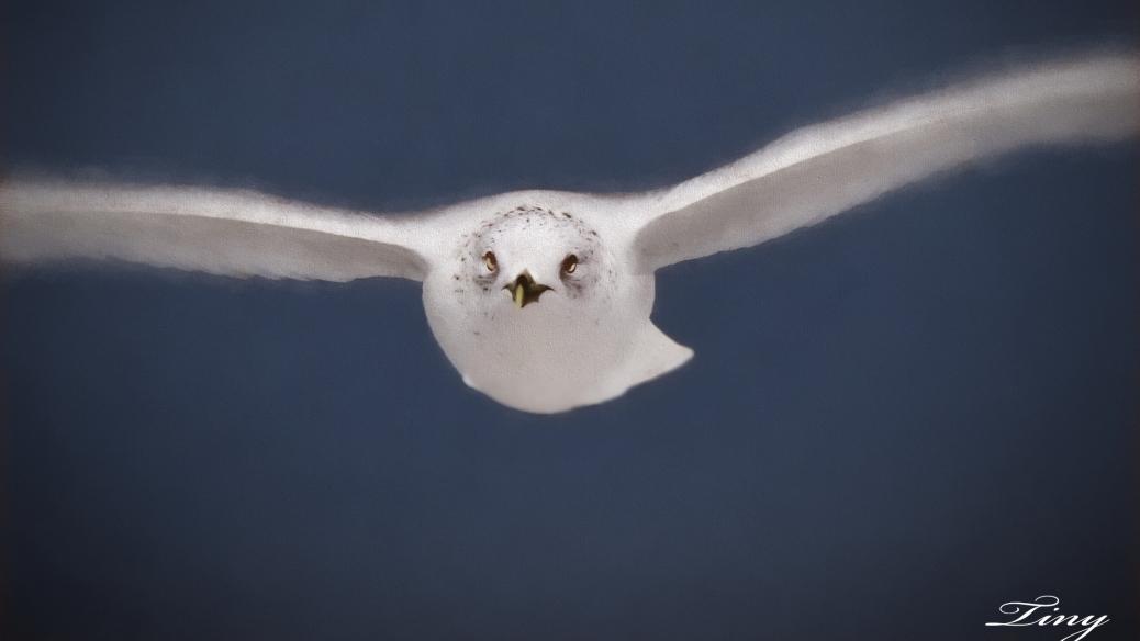 flying gull digital art by tiny 16x9