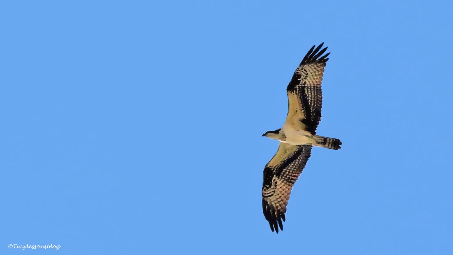 mama osprey ud67
