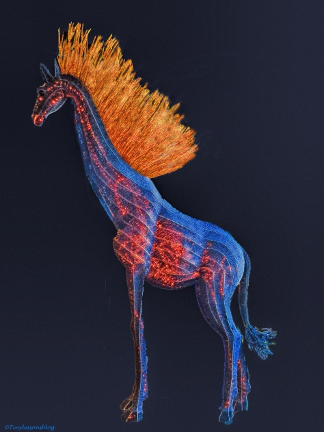 the fire horse at dali museum by tiny ud68