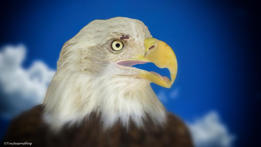 american eagle 3 ud70 16x9