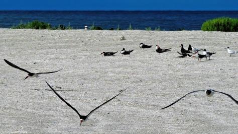 birds on the beach 2 ud73