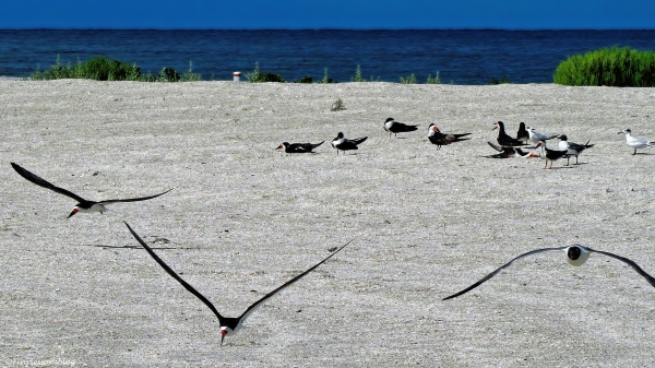 birds on the beach 2 ud73