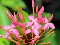 flower 3 ud73