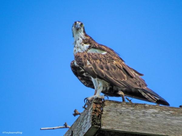 mama osprey ud73