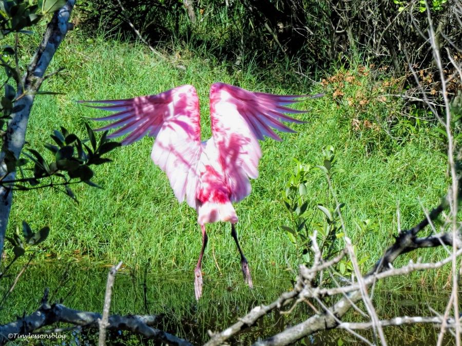 Miss Rosa flies away ud72