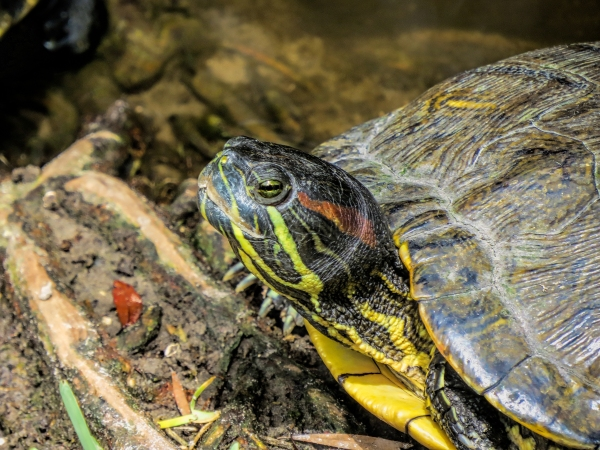 turtle closeup ud70