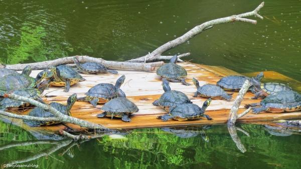 turtle resort ud70