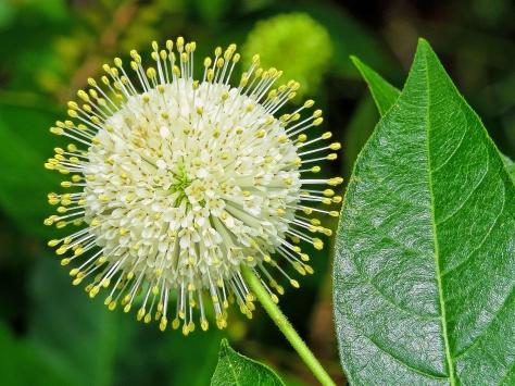 wild flower 2 mcGough ud70