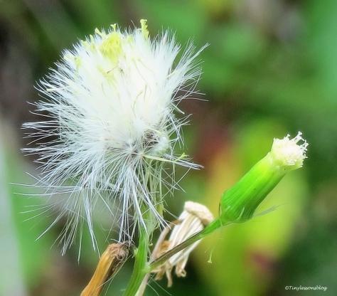 wild flower at McGough ud70