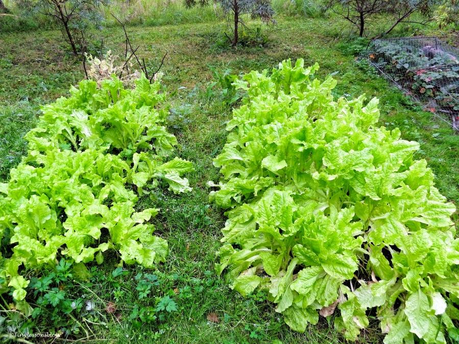 garden Finland Aug16 UD75