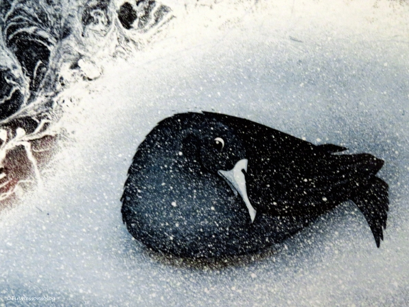 litho bird in the snow Leporanta Finland Au75g16 web UD75