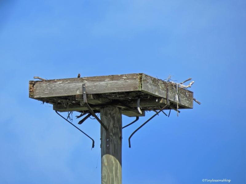 osprey nest ud75