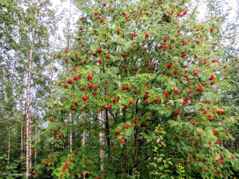 rowan 2 Finland Aug16 UD75