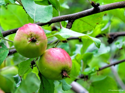 two apples Finland Aug16 UD75
