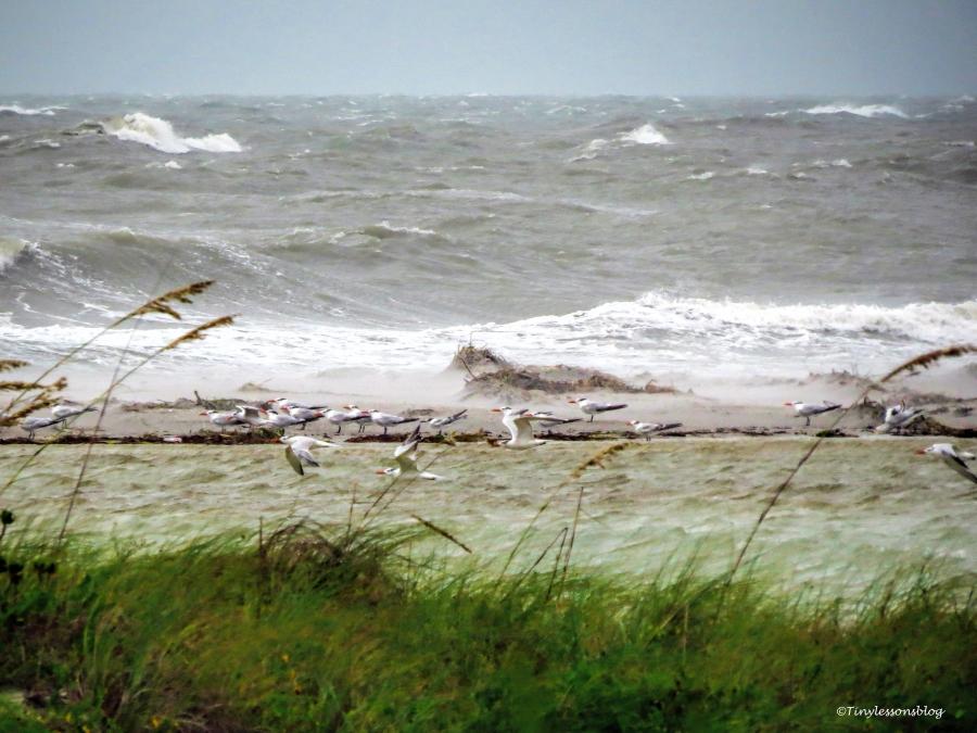 6 foot waves Hermine UD77