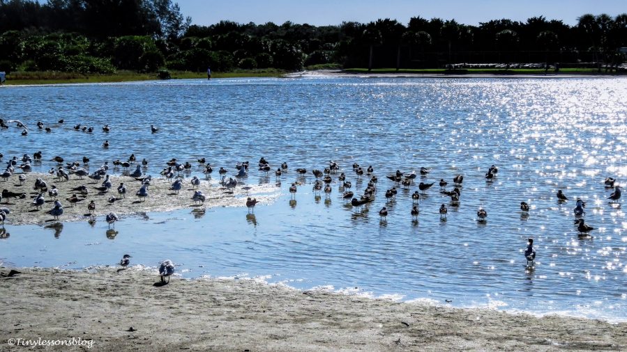 birds-at-the-beach-lake-ud79