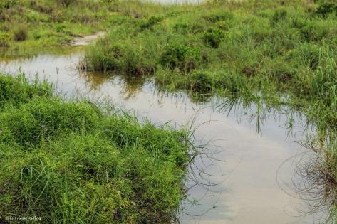 hermine flooded path UD77
