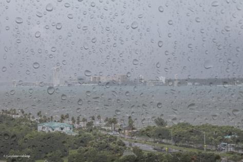 rain and the bay Hermine UD77