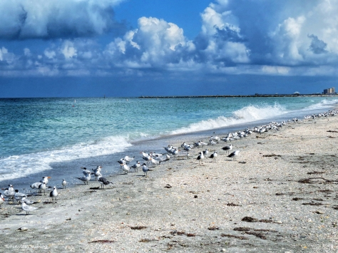 beach-and-hundreds-of-birds-ud83
