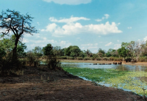 elephants-crossing-luangwa-river-zambia-nos