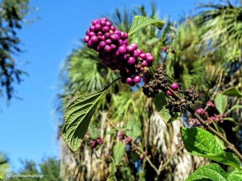 fall-berries-ud87