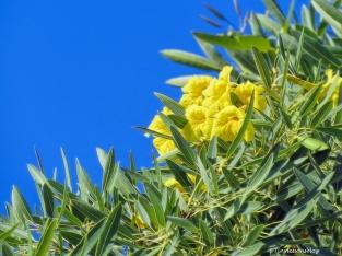 flowering-tree-ud83
