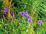 flowers-ud83