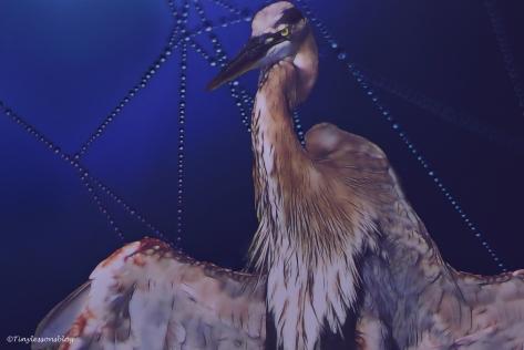 great-blue-heron-halloween-2-ud88