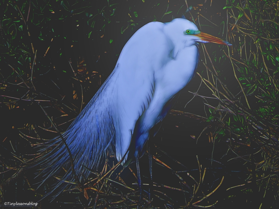 great-egret-halloween-3-ud88