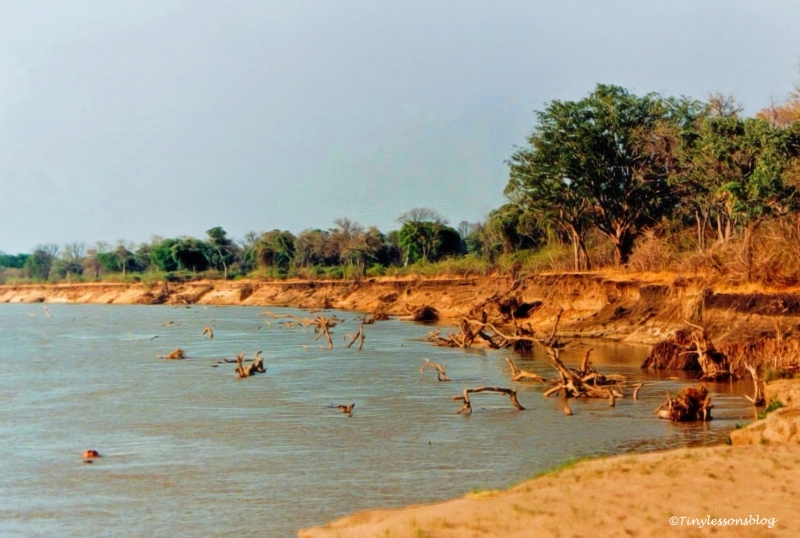 luangwa-river-bank-in-zambia-nos1