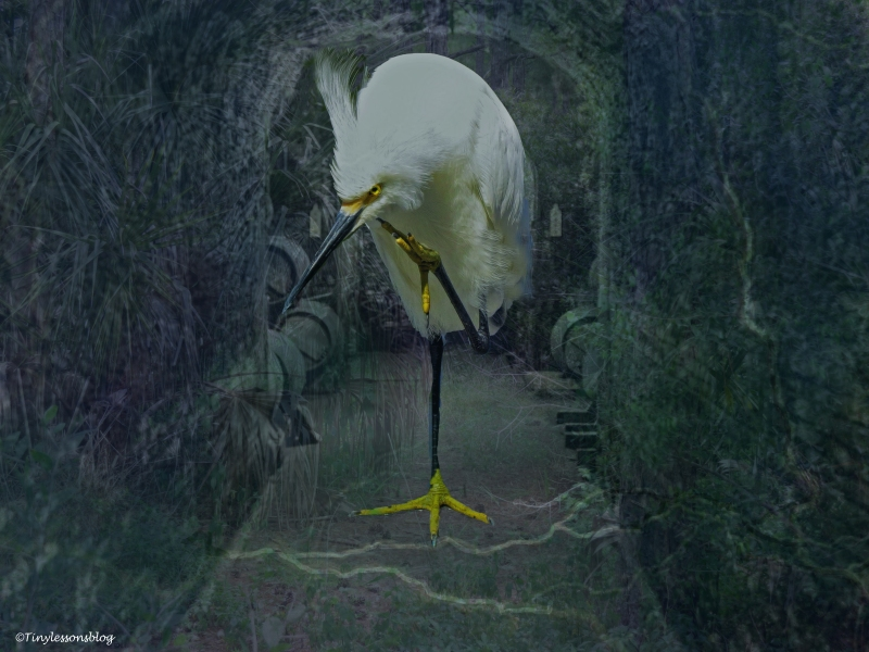 nature-reserve-forest-and-snowy-egret-halloween-2-ud88