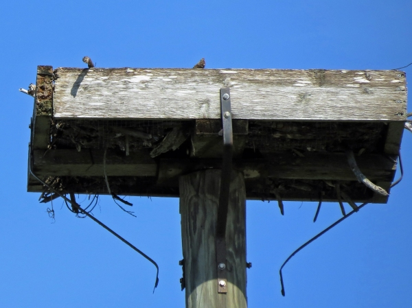 osprey-nest-sept-26