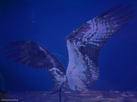 papa-osprey-halloween-3-ud88