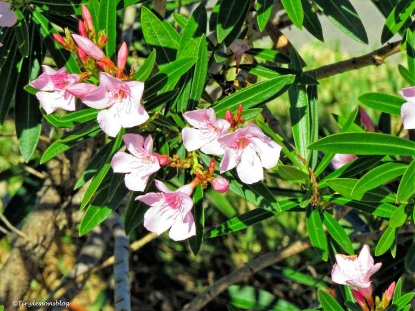 pink-flowers-ud87