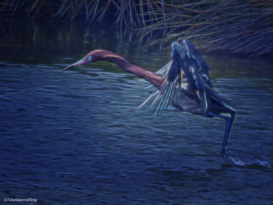 reddish-egret-hunting-halloween-ud88