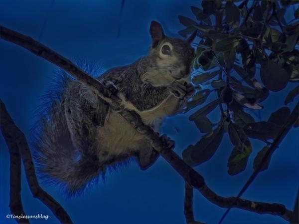 squirrel-halloween-ud88