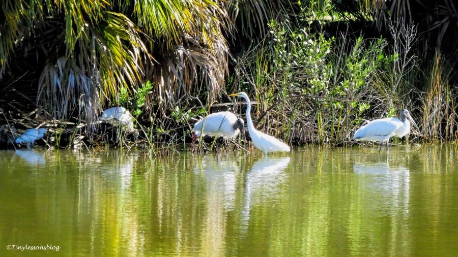 storks-and-egrets-ud87