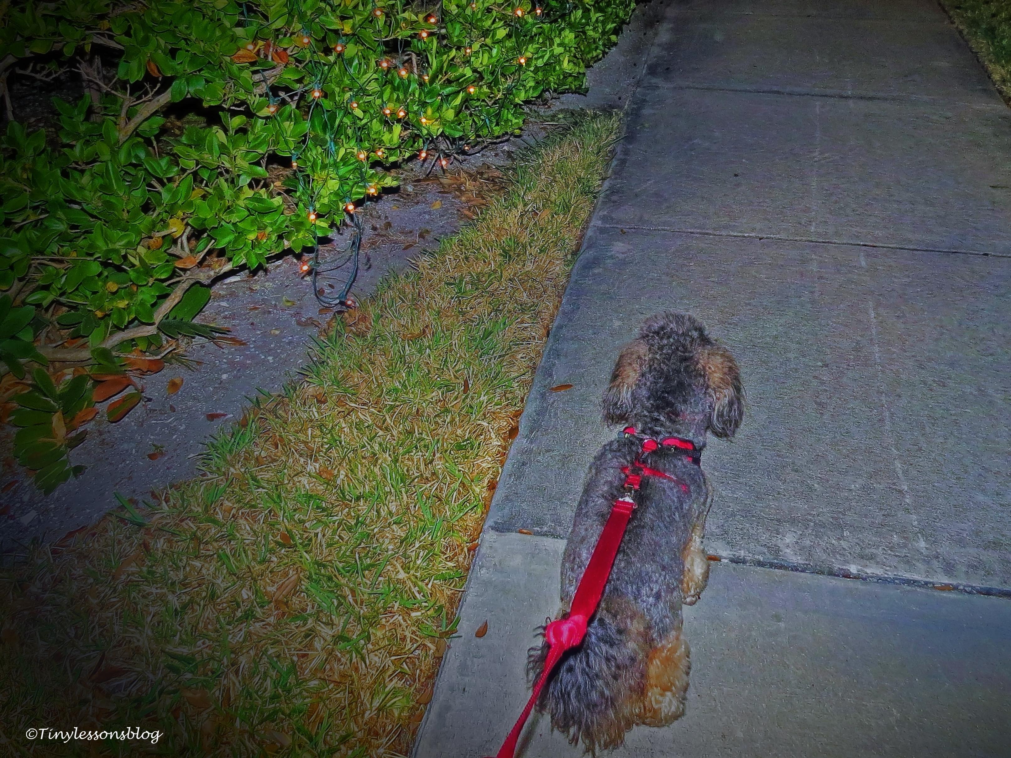 evening walk ud93.jpg