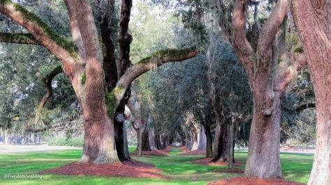 the-avenue-of-oaks-st-simons-georgia-ud98