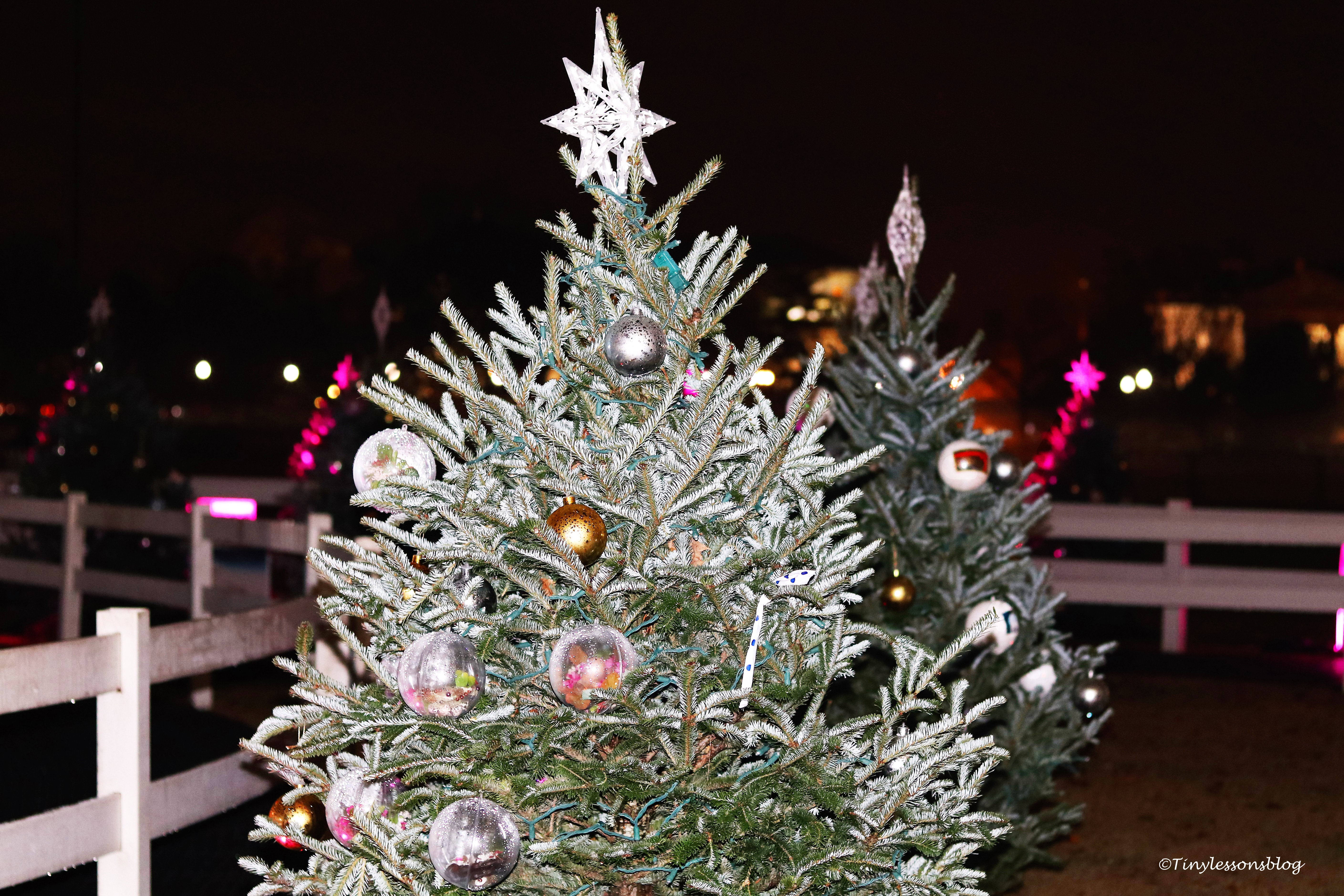 white-house-xmas-trees-small-ud92