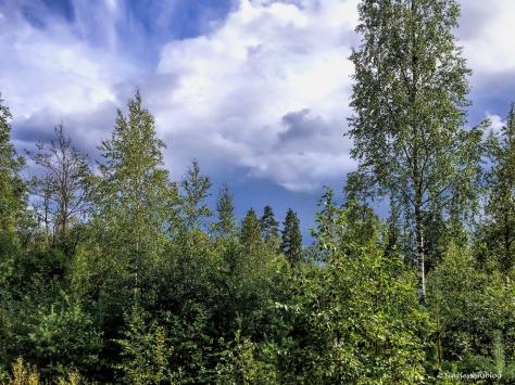 Finnish forest UD106.jpg