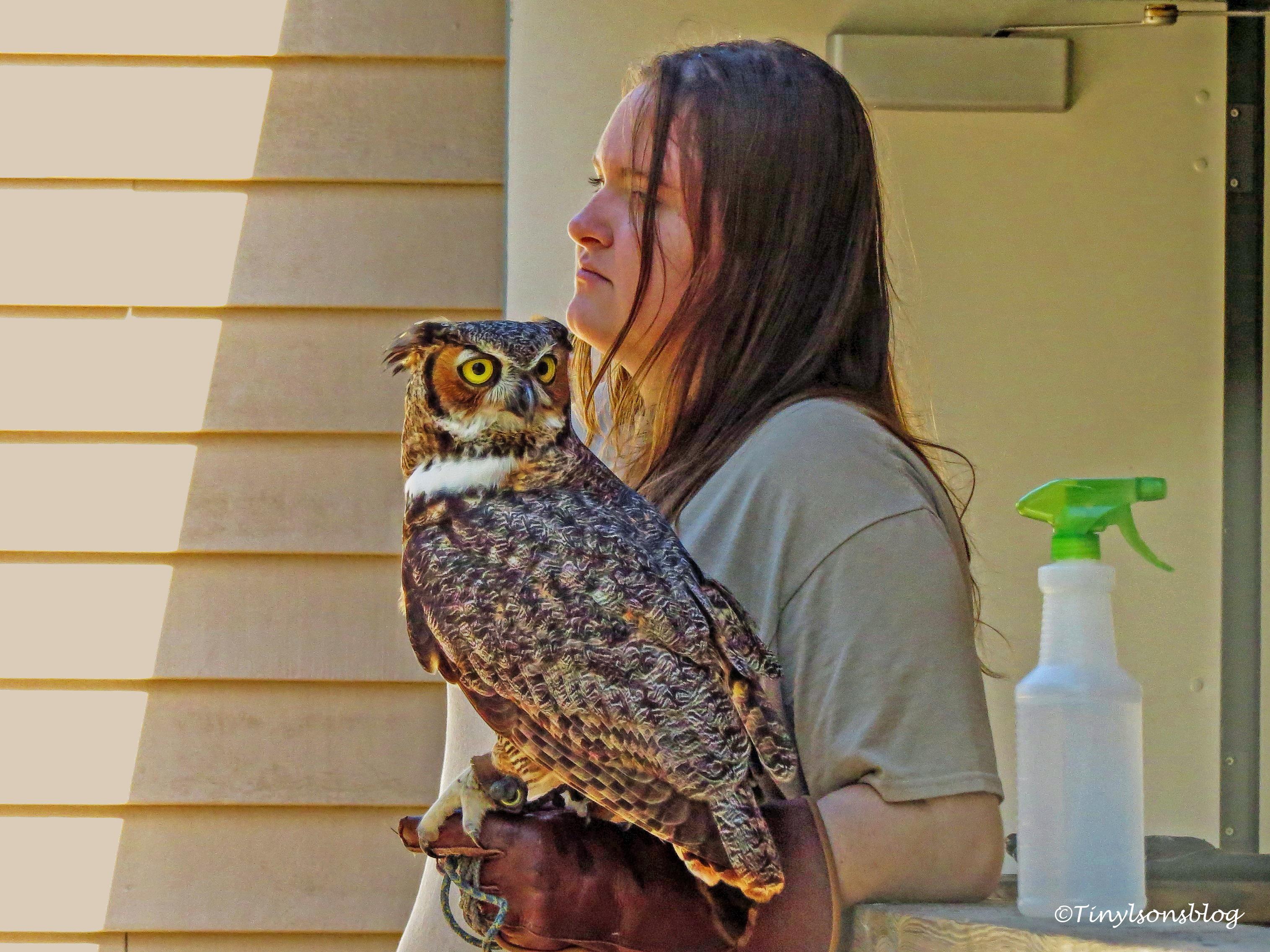 greathorned-owl-ud108