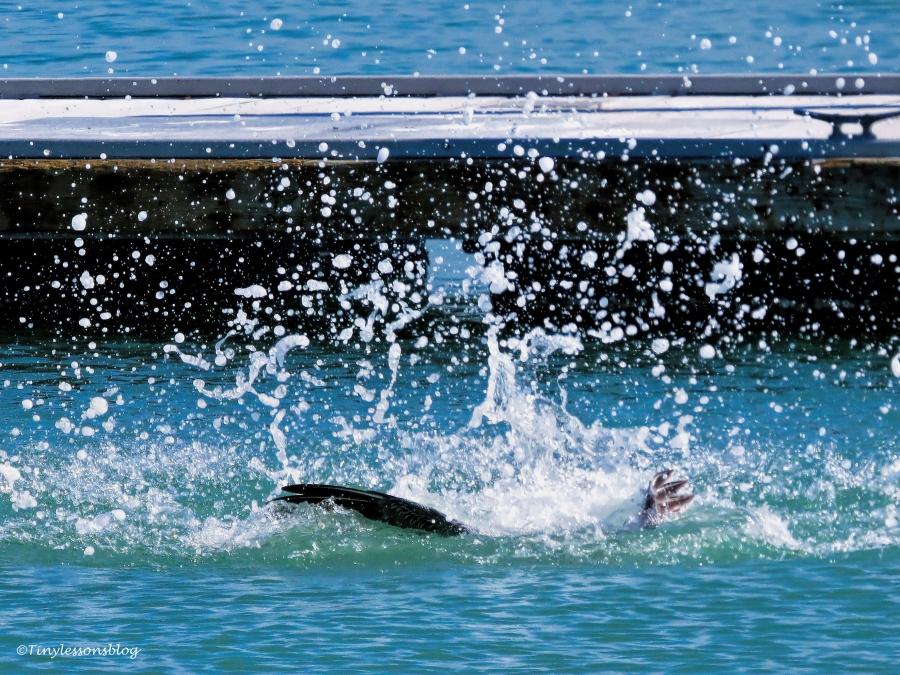 pelican-diving-ud105