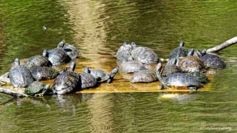 turtles-ud108