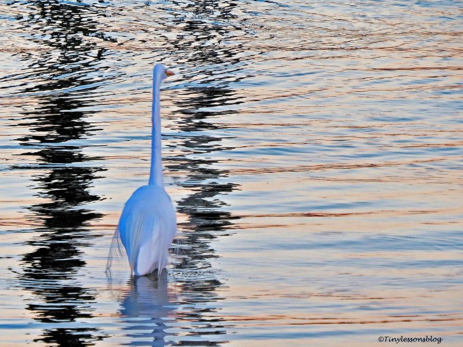 Great egret at night ud112